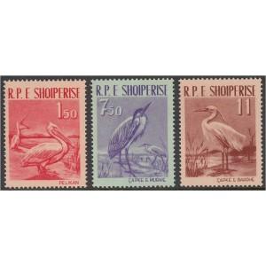 Albaania - linnud 1961, puhas