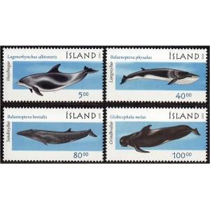 Island - vaalad ja delfiinid 2001, puhas