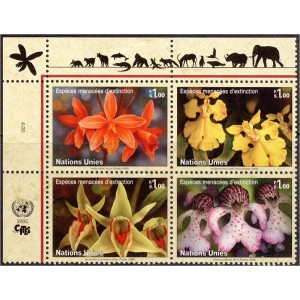 ÜRO (Genf) - lilled 2005, **
